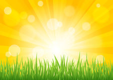 Bright vector sun effect with green grass field Stock Photos