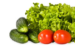 Bright vegetables, salad, tomato, cucumber Stock Photos
