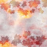 Bright vibrant autumn background with maple leaves silhouettes on the watercolor backdrop. Place for text, copyspace. Square illus Royalty Free Stock Photography