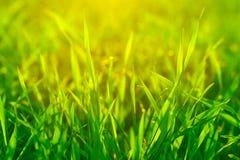 Bright vibrant green grass Stock Photos