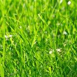 Bright vibrant green grass Stock Photography