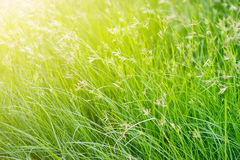 Bright vibrant green grass on nature background Stock Image