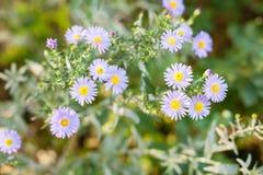 Bright violet flower Stock Images