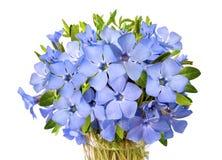 Bright violet wild periwinkle flower bouquet stock photo