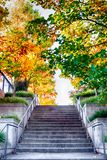 Bright vivid colorful autumn fall leaves royalty free stock photo