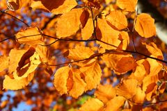 Bright vivid fall leaves Royalty Free Stock Photography