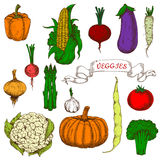 Bright vivid organically grown vegetables sketches Stock Images