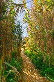 Bright walkway cutting through bushes Ponta da Piedade, Portugal royalty free stock image