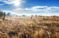 Bright warm sun over a magic meadow Royalty Free Stock Images