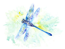 Bright Watercolor Illustration of Colorfull Dragonfly Stock Photo
