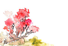 Bright Watercolor Illustration of Sakura Blossom. Japanese Red Cherry Tree. Hand Drawn Image Isolated on White Background.         Watercolor Painting Royalty Free Stock Photography