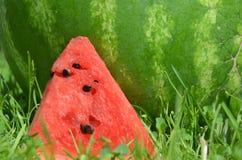 Watermelon 8 stock photo