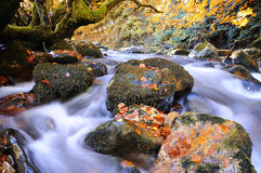 Bright waterscape of fast rocky river Stock Photos