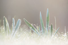 Bright wet morning with grass Royalty Free Stock Photography
