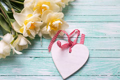 Bright white daffodils flowers  and decorative heart Stock Image
