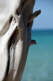 Bright white dry wood trunk at Beach 69 Royalty Free Stock Photos
