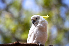 Bright white parrot sit on a branch Stock Photography