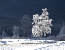 Bright White Tree royalty free stock images