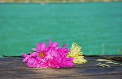 Bright Wilting Flowers on Rustic Table. These bright magenta and yellow flowers are wilting as they are laid on a wooden picnic table at a resort with the Stock Images