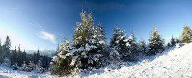 Bright winter Royalty Free Stock Image