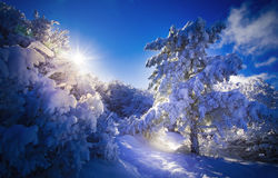 Bright winter Stock Photo
