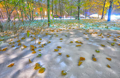 Bright winter-autumn landscape background Stock Photos