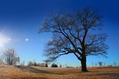 Bright winter day Stock Images