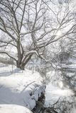 Bright winter landscape Royalty Free Stock Image