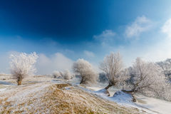 Bright winter scenery, with frozen river and trees Stock Photo