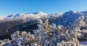 Bright winter scenery in the mountains, with frost and rocks covered with fresh snow. On a cold freezing day Royalty Free Stock Photos