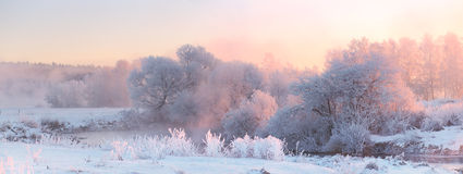 Bright winter sunrise. White frosty  trees in Christmas morning. Stock Images