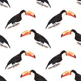 Bright wonderful beautiful lovely sophisticated jungle tropical black and white toucan  Royalty Free Stock Photo
