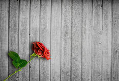 Bright wood background with a red rose Royalty Free Stock Photo