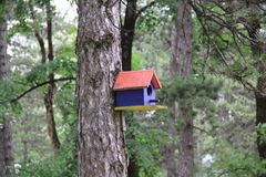Bright wooden birdhouse mounted on a tree in the green forest Stock Image