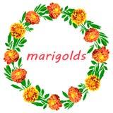 Bright wreath of lush orange marigolds isolated on white background stock illustration