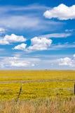 Bright yellow Arizona farmland stretching to horizon and intense Stock Photo