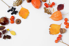 Bright yellow autumn leaves, chestnuts, pine cones and orange physalis flowers on a white background with copy space for Stock Photos