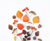 Bright yellow autumn leaves, chestnuts, pine cones and orange physalis flowers on a white background with copy space for stock photography