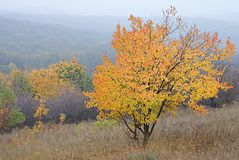 Autumn tree against forest on hills in mist stock images