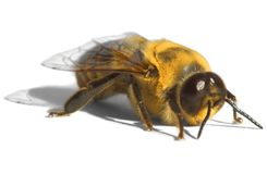 Bright Yellow Bee ~ Drone Stock Photo