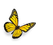 Bright Yellow Butterfly Isolated on White. Enhanced color of yellow butterfly. Soft shadow underneath. Isolated on pure white stock image