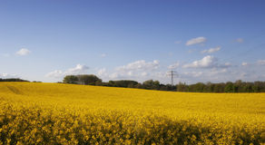 Bright yellow Canola Field Stock Images