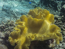 bright yellow coral royalty free stock photo