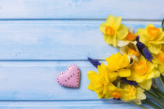 Bright yellow  daffodils  flowers and decorative pink heart   on Stock Image