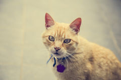 Bright yellow eyes cat portrait Royalty Free Stock Photography