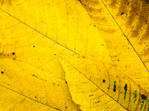 Bright yellow fall leaves tile background. Bright yellow and brown fall leaves with veins background Stock Image
