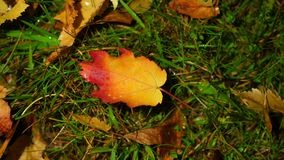 Bright yellow fallen leaf, lighting change and shadow move on ground. Bright autumn colour concept stock video