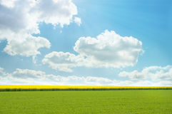 Bright yellow field. Bright yellow field from rapeseed Royalty Free Stock Photos