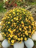 Bright yellow flowers stock photo