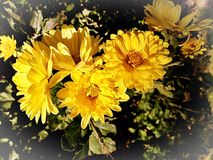 Yellow Blossom Bouquet In A Green Leaf Background royalty free stock images